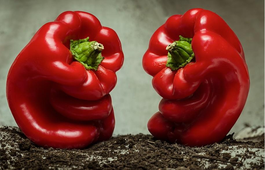 Giuseppe Arcimboldo Habitus Living Fugly Fruit Stephen Todd Tony Amos