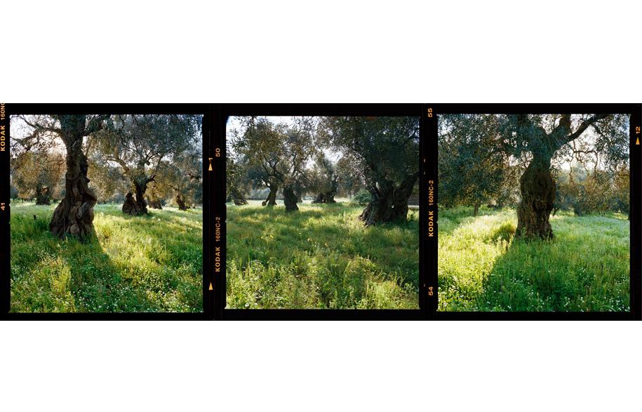 grove_1