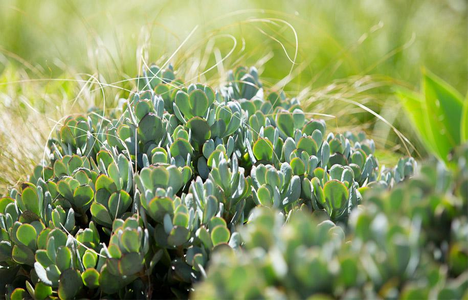 rooftop_gardens_8
