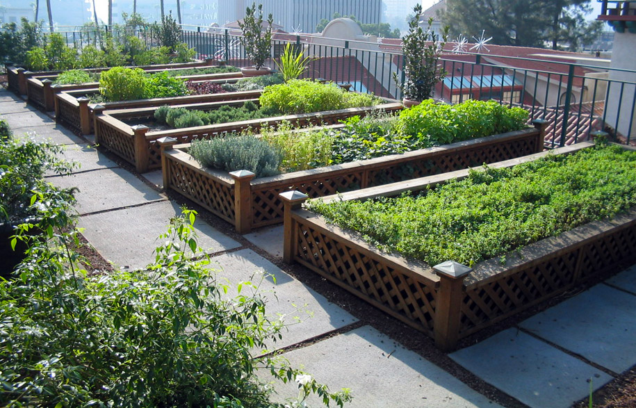 Green rooftop dream for Roof garden pictures